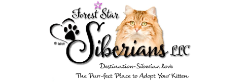 Hypo-Allergenic Siberian Cats and Kittens for Sale - Forest*Star