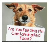 Choose Healthy Food for Your Pet