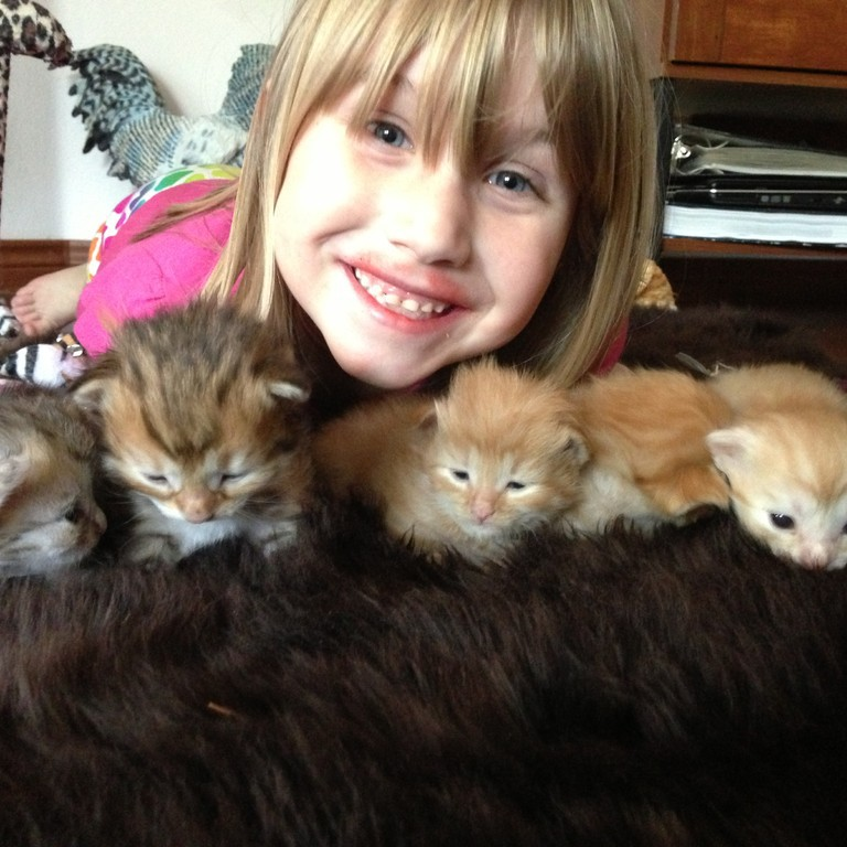 Siberian Cat Breeders Washington State
